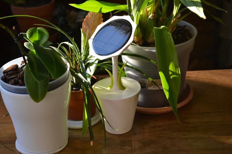 Decoración de jardines con flores fotovoltaicas
